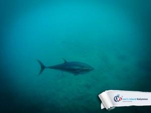 02092015-fun-dive-tuna-02