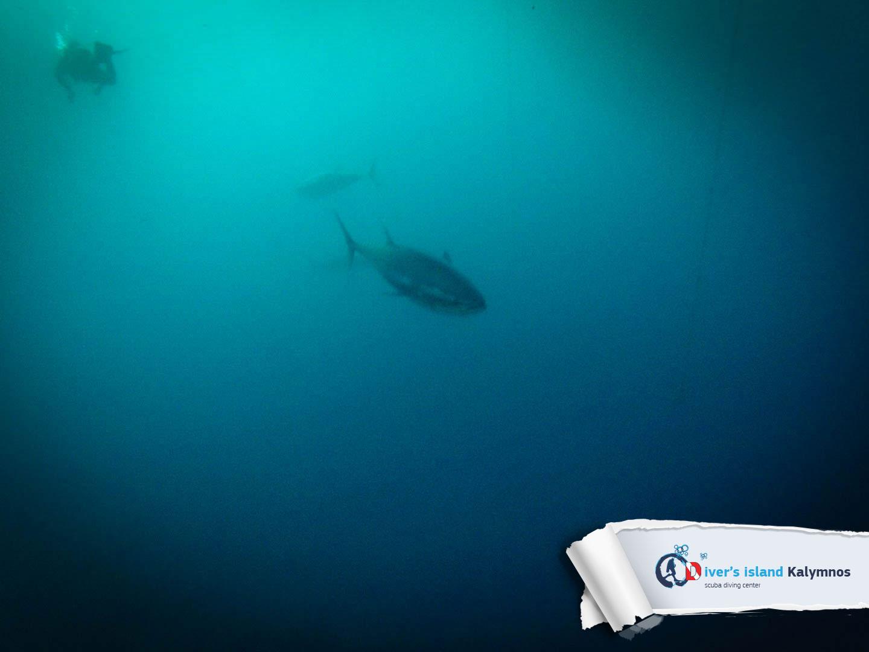 02092015-fun-dive-tuna-03