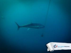 02092015-fun-dive-tuna-04