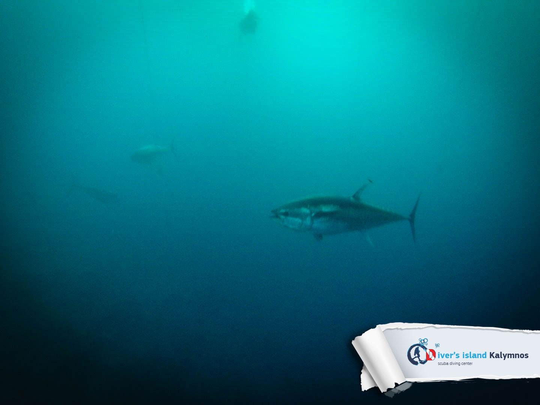 02092015-fun-dive-tuna-05