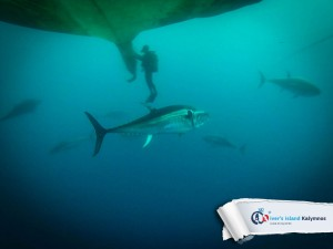 07092015-fun-dive-tuna-03