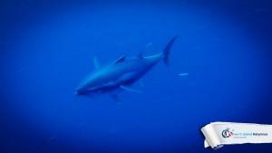 09082015-fun-dive-tuna-01
