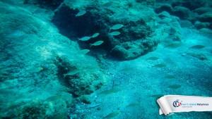 15082015-fun-dive-seal-cave-04