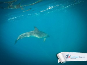 18092015-fun-dive-dolphins-04